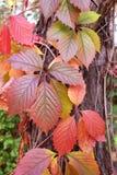bladeren van mooi Stock Afbeeldingen