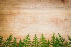 Bladeren van Oosterse Arborvitae op houten raad Stock Foto's