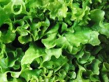Bladeren van salade Stock Fotografie