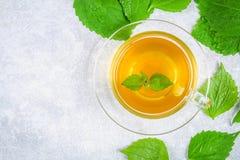 Bladeren van verse groene netel en een duidelijke glaskop van kruidennetelthee op een grijze concrete lijst Hoogste mening stock afbeeldingen