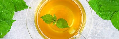 Bladeren van verse groene netel en een duidelijke glaskop van kruidennetelthee op een grijze concrete lijst Hoogste mening stock foto's