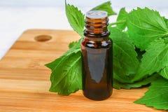 Bladeren van verse groene netel en een kleine fles medische netelolie op een grijze concrete lijst stock afbeelding