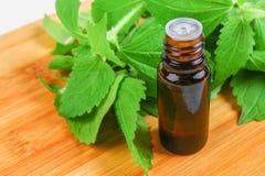 Bladeren van verse groene netel en een kleine fles medische netelolie op een grijze concrete lijst stock afbeeldingen