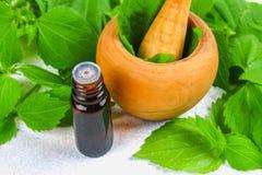 Bladeren van verse groene netel en een kleine fles medische netelolie op een grijze concrete lijst stock foto's