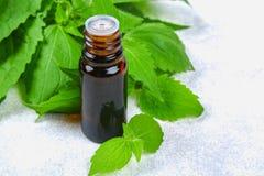 Bladeren van verse groene netel en een kleine fles medische nettl royalty-vrije stock foto