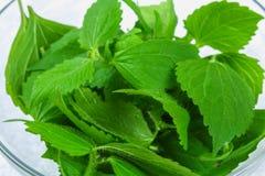 Bladeren van verse groene netel, salade in een glaskom op grijze mede royalty-vrije stock afbeeldingen