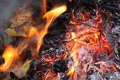 Bladeren in vlammen Stock Fotografie