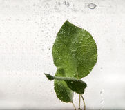 Bladeren in water met bellen stock foto