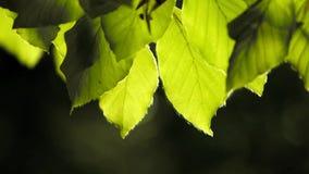 Bladeren in zachte motie stock video