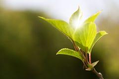 Bladeren in zonlicht Stock Foto