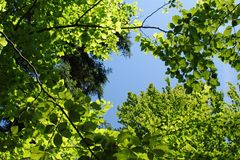 Bladeren in zonlicht Stock Foto's