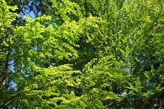 Bladeren in zonlicht Stock Afbeelding