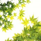 Bladeren in Zonneschijn stock afbeelding