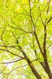 Bladeren in zonneschijn royalty-vrije stock afbeeldingen