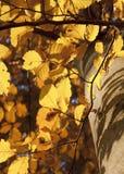 Bladerenachtergrond Royalty-vrije Stock Afbeeldingen