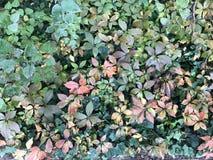 Bladerenachtergrond met de herfstkleuren royalty-vrije stock afbeelding