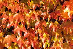 Bladerenpatroon 2 Stock Afbeelding