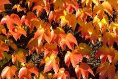 Bladerenpatroon 1 Royalty-vrije Stock Afbeeldingen