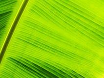 Bladerenpatroon op achtergrond stock foto's