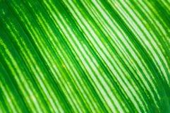 Bladerenpatroon, texturen van varen Royalty-vrije Stock Foto's