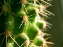 Blades. Close view of a cactus royalty free stock images