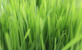 Blades of Grass Stock Photos