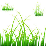 Blades of Grass. An image of a set of blades of grass on white background Stock Photography