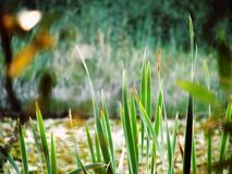 Blades of Grass Stock Image