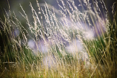 Blades of grass. In summer field Stock Photography