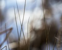 Blades of grass against the light. On the pond Royalty Free Stock Images
