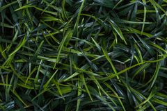 Blades of grass background Royalty Free Stock Photos