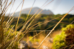 Blades of grass. In a blurred field with mountains Royalty Free Stock Images