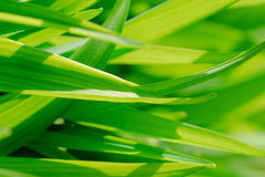 Blades of Grass Close-Up. Green grass in the sunshine, close up stock photo
