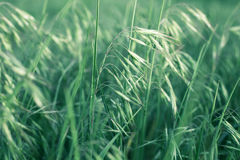 Blades of grass Royalty Free Stock Image