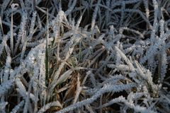 Blades of grass covered with ice crystals lit by the sun, shallow depth of field. Germany royalty free stock photos