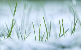 blades of grass with drops Royalty Free Stock Photos