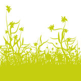 Blades of grass and flowers. Green blades of grass and flowers Stock Images