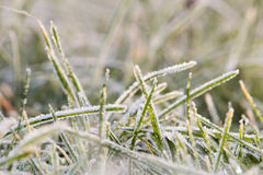 Blades of grass with rime 1. Closeup of blades of grass covered with rime Stock Photography