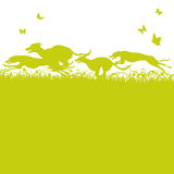 Blades of grass and running dogs and greyhounds. Blades of green grass and running dogs and greyhounds Royalty Free Stock Image