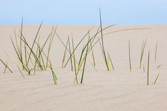 Blades of grass in the sand. Closeup of blades of grass in the sand Stock Photography