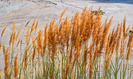 Blades of grass in the sand. Closeup view Stock Photos