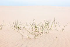 Blades of grass in the sand Royalty Free Stock Photos