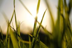 Blades of Grass in sunlight Royalty Free Stock Image