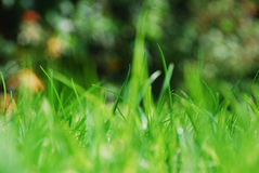 Blades of grass on a sunny day. In a garden in England Stock Photo
