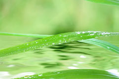 Blades of grass and water Stock Images