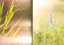 Blades of grass and wildflowers Royalty Free Stock Photography