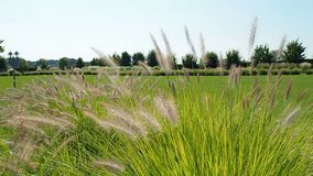 Blades of grass wind. Blades of grass in the wind stock footage