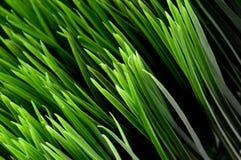 Blades of green grass Stock Photos