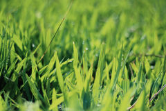 Blades of green grass Stock Images