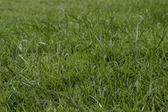 Blades of green grass. stock images